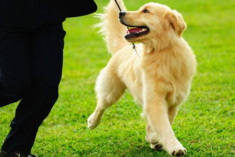 Walking Your Dog is More Than Just Exercise