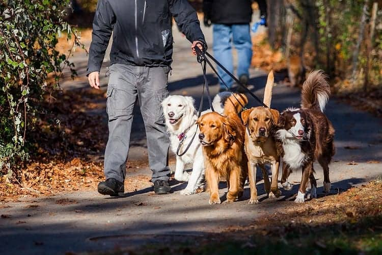 Where to Find Dog Walking Services
